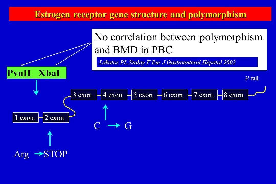 Estrogen receptor gene structure and polymorphism PvuII XbaI Arg STOP CG 2 exon 1 exon 4 exon 3 exon 6 exon 5 exon 8 exon 7 exon 3'-tail No correlatio