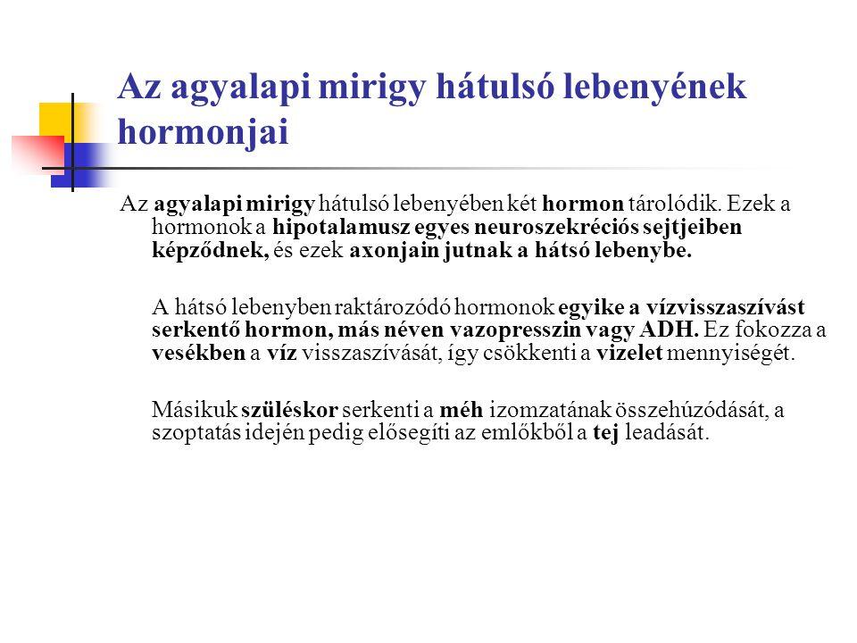 Az agyalapi mirigy hátulsó lebenyének hormonjai Az agyalapi mirigy hátulsó lebenyében két hormon tárolódik.