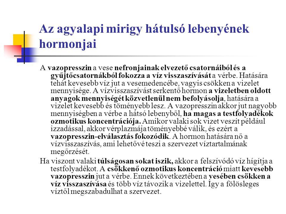 Az agyalapi mirigy hátulsó lebenyének hormonjai A vazopresszin a vese nefronjainak elvezető csatornáiból és a gyűjtőcsatornákból fokozza a víz visszaszívását a vérbe.