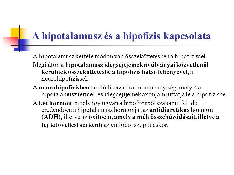 A hipotalamusz és a hipofízis kapcsolata A hipotalamusz kétféle módon van összeköttetésben a hipofízissel.