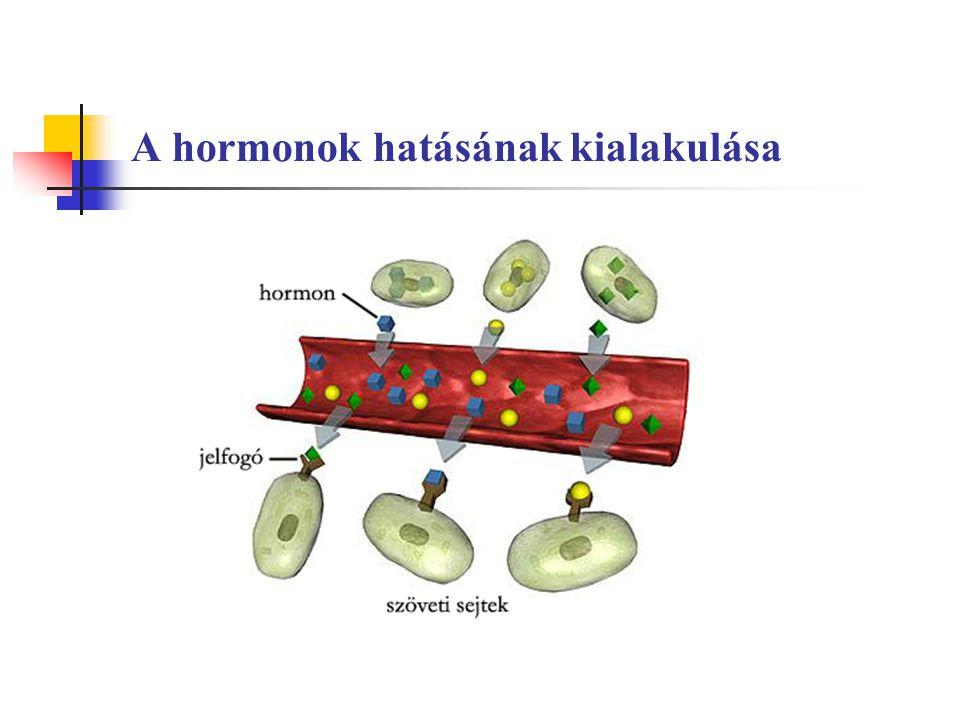 A hormonok hatásának kialakulása