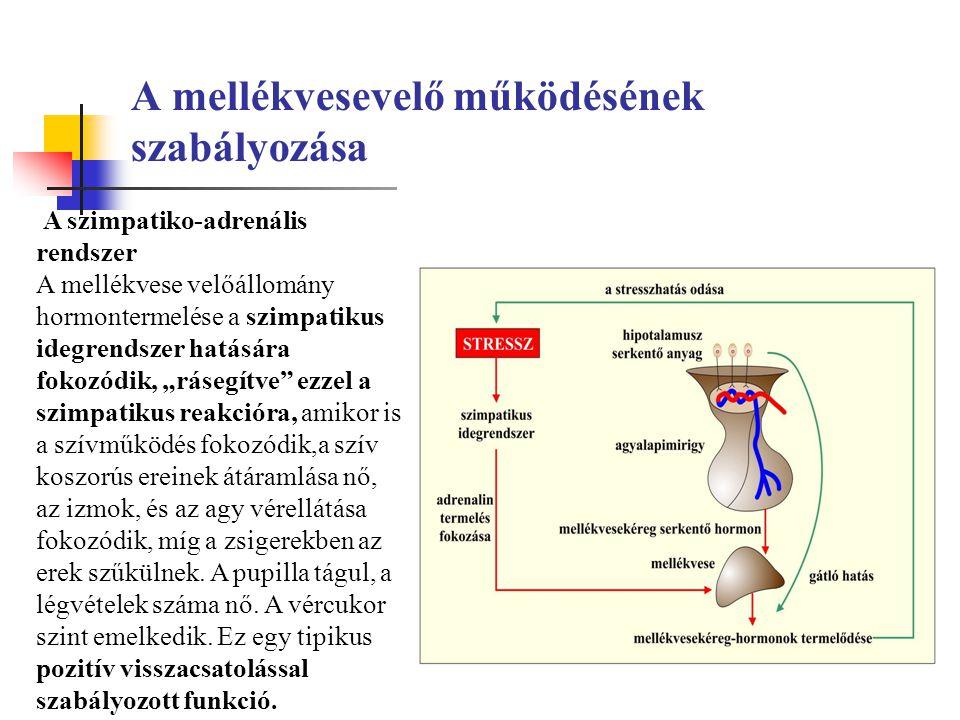 """A mellékvesevelő működésének szabályozása A szimpatiko-adrenális rendszer A mellékvese velőállomány hormontermelése a szimpatikus idegrendszer hatására fokozódik, """"rásegítve ezzel a szimpatikus reakcióra, amikor is a szívműködés fokozódik,a szív koszorús ereinek átáramlása nő, az izmok, és az agy vérellátása fokozódik, míg a zsigerekben az erek szűkülnek."""