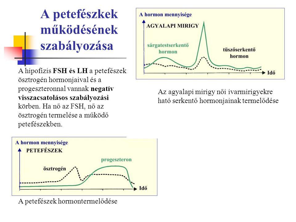 A petefészkek működésének szabályozása A hipofízis FSH és LH a petefészek ösztrogén hormonjaival és a progeszteronnal vannak negatív visszacsatolásos szabályozási körben.