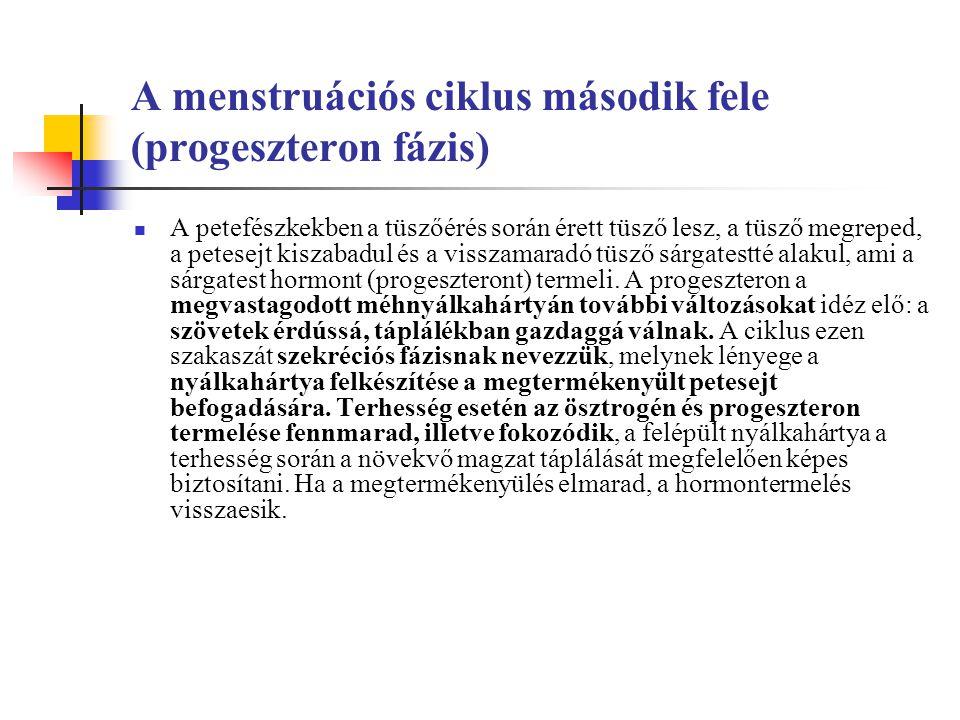 A menstruációs ciklus második fele (progeszteron fázis) A petefészkekben a tüszőérés során érett tüsző lesz, a tüsző megreped, a petesejt kiszabadul és a visszamaradó tüsző sárgatestté alakul, ami a sárgatest hormont (progeszteront) termeli.