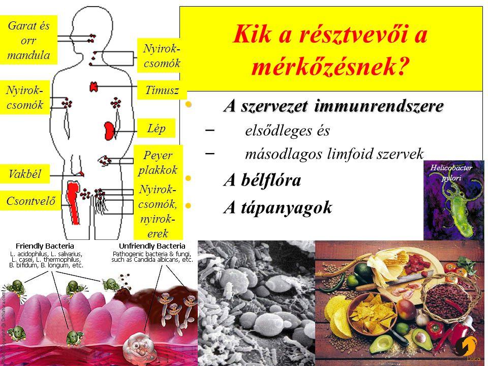 Nukleinsavak Purin és pirimidin nukleotidok – – Szükséges a sejt közvetítette immunválasz normális fejlődéséhez – – Serkenti a makrofágok aktivitását – – Hiánya esetén zavart szenved a sejtes immunválasz, csökken a szervezet ellenálló képessége, nő az átültetett szövetek túlélési esélye