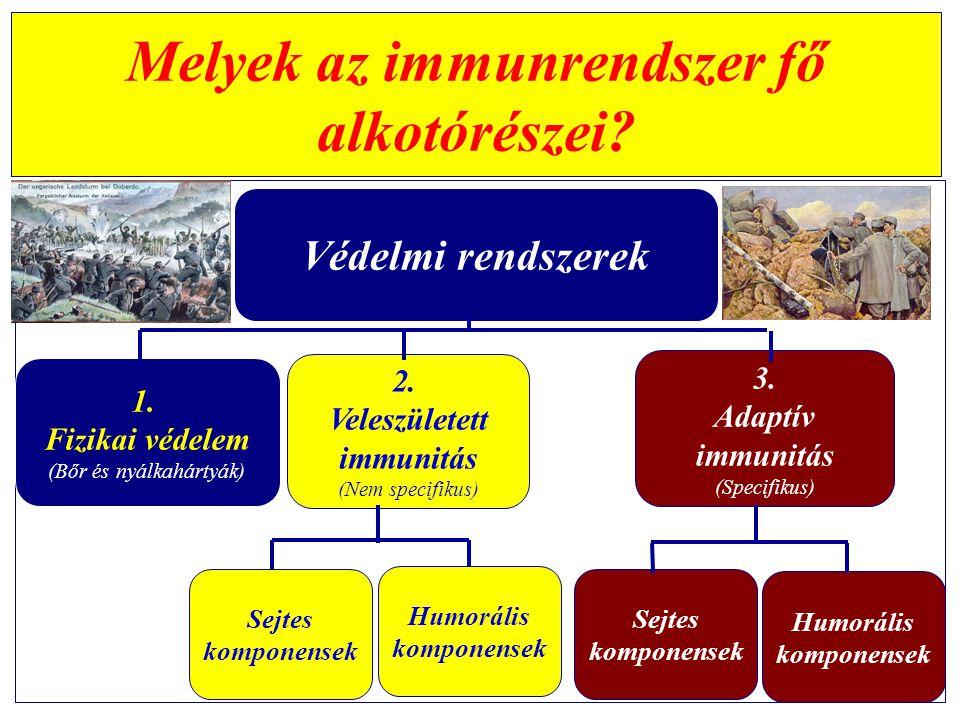 A táplálék/takarmány - alkotórészei Funkcionális tápanyagok (Szükségleti értékek nincsenek) Táplálóanyagok (Szükségleti értékkel jellemezhetők) Szénhidrátok Zsírok Fehérjék Makro- és mikroelemek Vitaminok Antioxidánsok Anti-mikróbiális anyagok Oligoszacharidok Enzimek, Emulgeátorok Íz- és aromaanyagok Színezőanyagok Milyen tápanyagok hatnak az immunrendszerre.