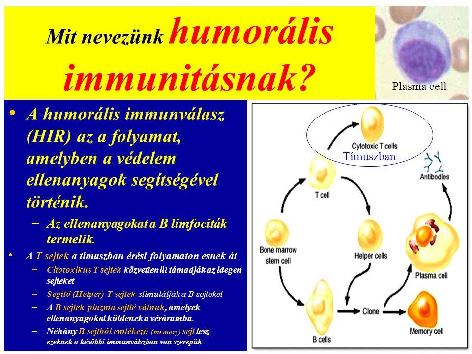 Eubiózis – diszbiózis (Az emberi test kb.