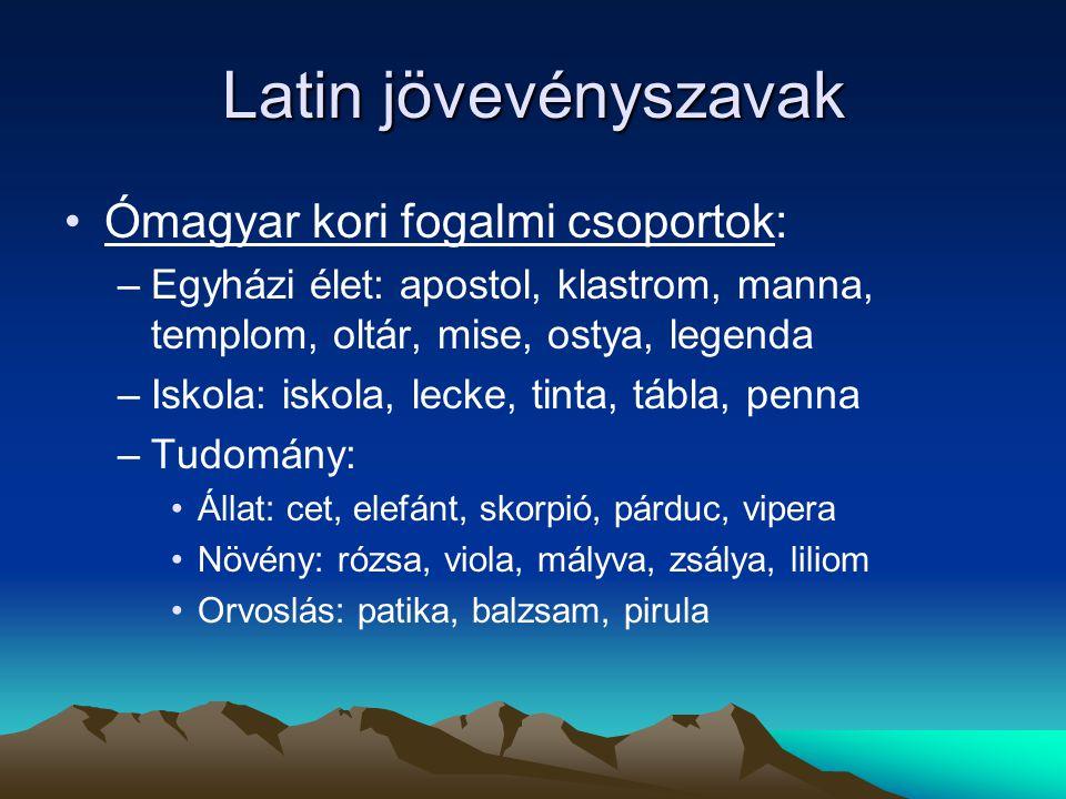 Latin jövevényszavak Ómagyar kori fogalmi csoportok: –Egyházi élet: apostol, klastrom, manna, templom, oltár, mise, ostya, legenda –Iskola: iskola, le