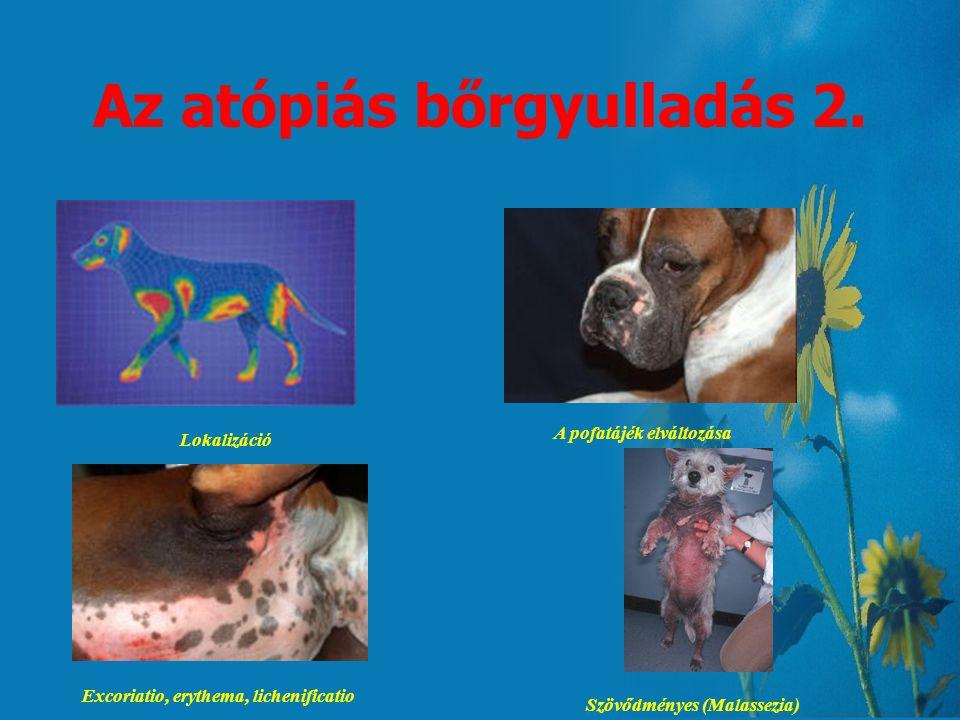 Az atópiás bőrgyulladás 1. -Genetikai eredetű allergiás diszpozíció -I. típusú (azonnali) allergiás reakció -Legtöbbször belélegezhető anyagok, mint n