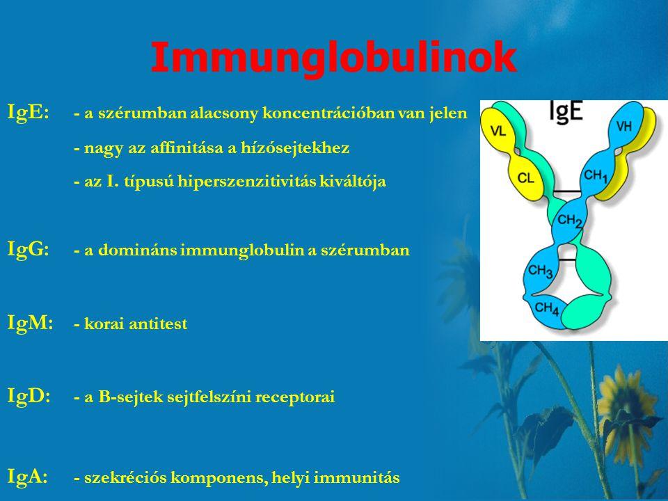 Immunglobulinok IgE: - a szérumban alacsony koncentrációban van jelen - nagy az affinitása a hízósejtekhez - az I.