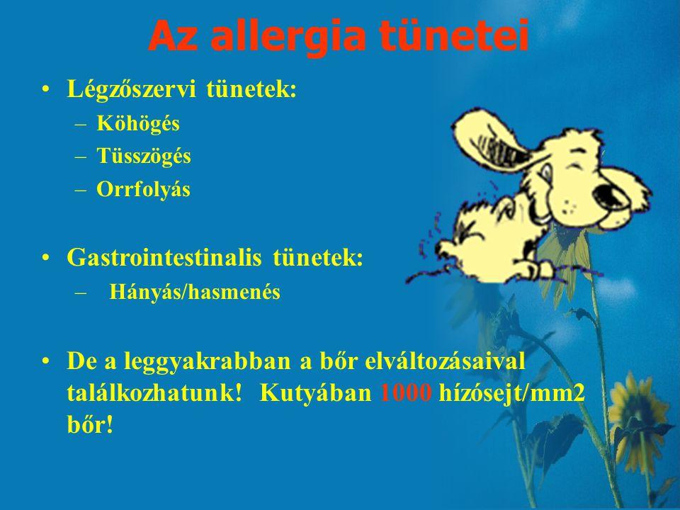 Az allergia tünetei Légzőszervi tünetek: –Köhögés –Tüsszögés –Orrfolyás Gastrointestinalis tünetek: –Hányás/hasmenés De a leggyakrabban a bőr elváltozásaival találkozhatunk.