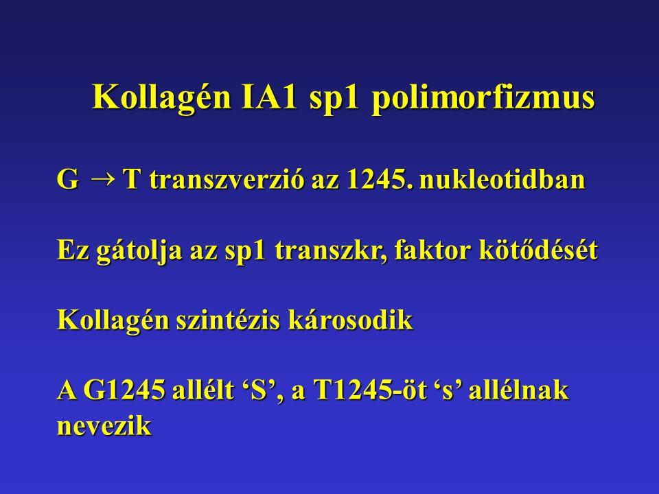 G T transzverzió az 1245. nukleotidban Ez gátolja az sp1 transzkr, faktor kötődését Kollagén szintézis károsodik A G1245 allélt 'S', a T1245-öt 's' al