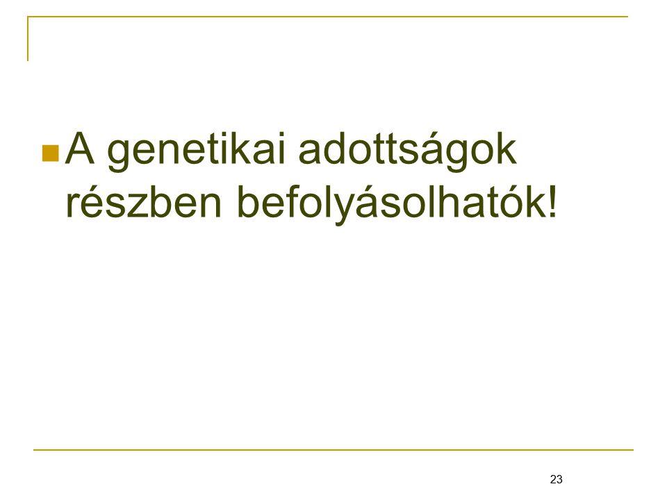23 A genetikai adottságok részben befolyásolhatók! 23