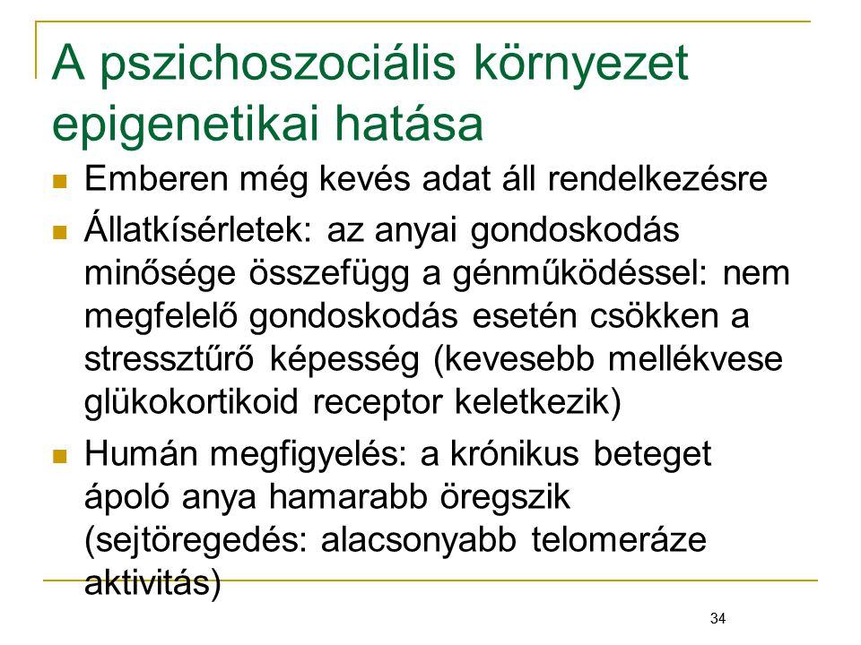 34 A pszichoszociális környezet epigenetikai hatása Emberen még kevés adat áll rendelkezésre Állatkísérletek: az anyai gondoskodás minősége összefügg a génműködéssel: nem megfelelő gondoskodás esetén csökken a stressztűrő képesség (kevesebb mellékvese glükokortikoid receptor keletkezik) Humán megfigyelés: a krónikus beteget ápoló anya hamarabb öregszik (sejtöregedés: alacsonyabb telomeráze aktivitás) 34