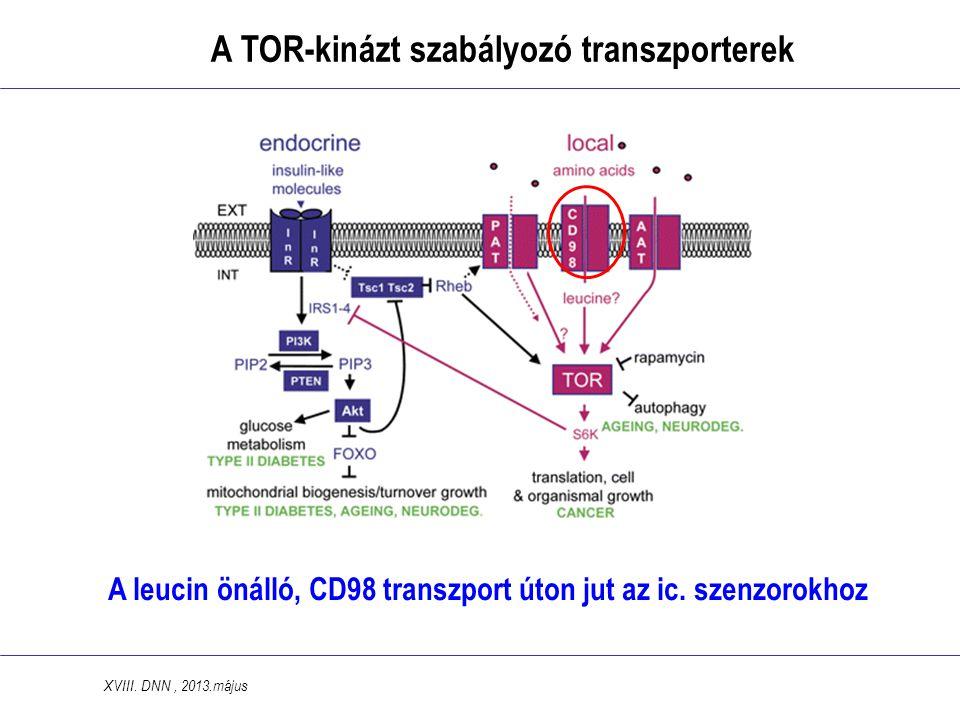 A leucin önálló, CD98 transzport úton jut az ic.