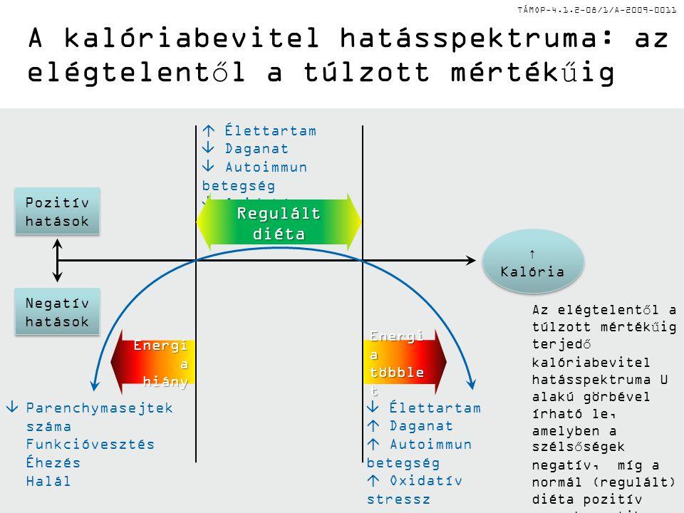 TÁMOP-4.1.2-08/1/A-2009-0011 Energi a hiány többle t A kalóriabevitel hatásspektruma: az elégtelentől a túlzott mértékűig Az elégtelentől a túlzott mértékűig terjedő kalóriabevitel hatásspektruma U alakú görbével írható le, amelyben a szélsőségek negatív, míg a normál (regulált) diéta pozitív vagy hormetikus élettani hatásokkal bírnak.