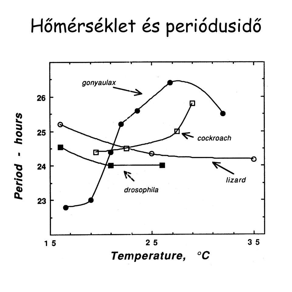 Hőmérséklet és periódusidő
