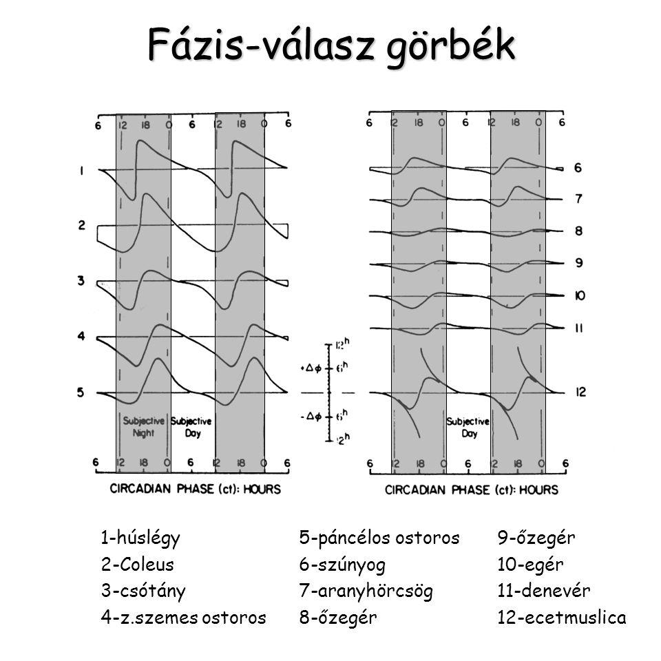 Fázis-válasz görbék 1-húslégy5-páncélos ostoros9-őzegér 2-Coleus 6-szúnyog10-egér 3-csótány7-aranyhörcsög11-denevér 4-z.szemes ostoros8-őzegér12-ecetm
