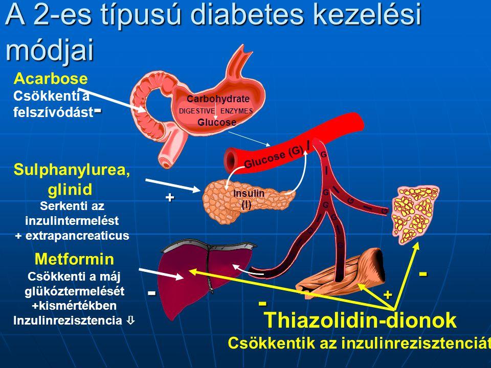 A 2-es típusú diabetes kezelési módjai Glucose (G) Carbohydrate Glucose DIGESTIVEENZYMES Insulin (I) I Acarbose Csökkenti a felszívódást- Sulphanylurea, glinid Serkenti az inzulintermelést + extrapancreaticus+ Metformin Csökkenti a máj glükóztermelését +kismértékben Inzulinrezisztencia - Thiazolidin-dionok Csökkentik az inzulinrezisztenciát - + - I I I I I I I G G G G G G G G I G G G