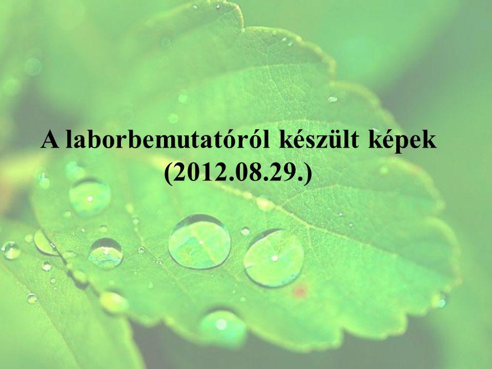 A laborbemutatóról készült képek (2012.08.29.)