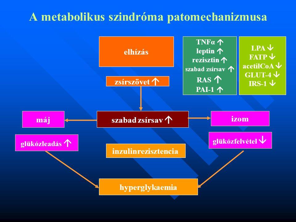 A metabolikus szindróma patomechanizmusa máj elhízás TNFα  leptin  rezisztin  szabad zsírsav  RAS  PAI-1  LPA  FATP  acetilCoA  GLUT-4  IRS-1  glükózfelvétel  inzulinrezisztencia izom zsírszövet  hyperglykaemia szabad zsírsav  glükózleadás 