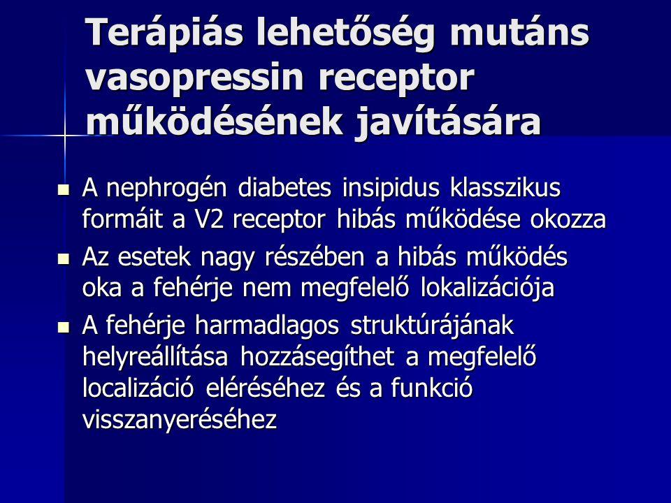 Terápiás lehetőség mutáns vasopressin receptor működésének javítására A nephrogén diabetes insipidus klasszikus formáit a V2 receptor hibás működése o