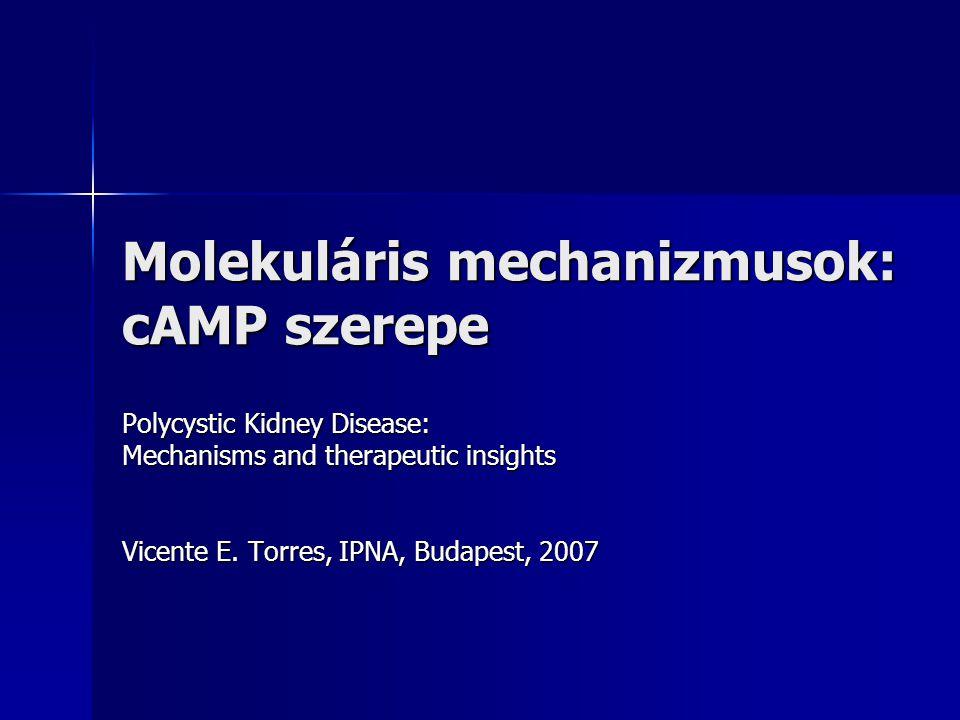 Molekuláris mechanizmusok: cAMP szerepe Polycystic Kidney Disease: Mechanisms and therapeutic insights Vicente E. Torres, IPNA, Budapest, 2007