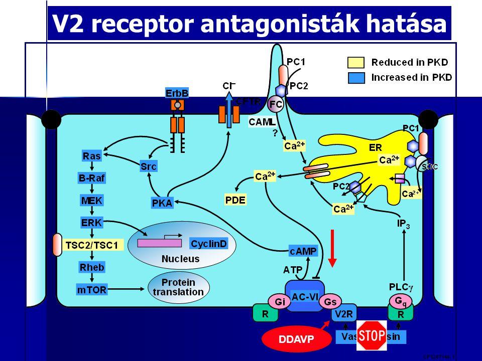 V2 receptor antagonisták hatása DDAVP