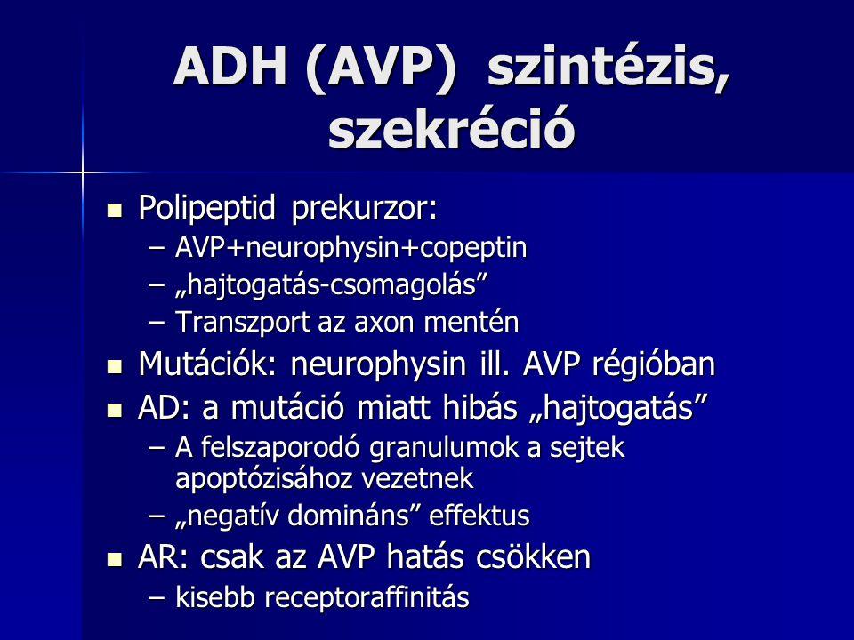 """ADH (AVP) szintézis, szekréció Polipeptid prekurzor: Polipeptid prekurzor: –AVP+neurophysin+copeptin –""""hajtogatás-csomagolás"""" –Transzport az axon ment"""