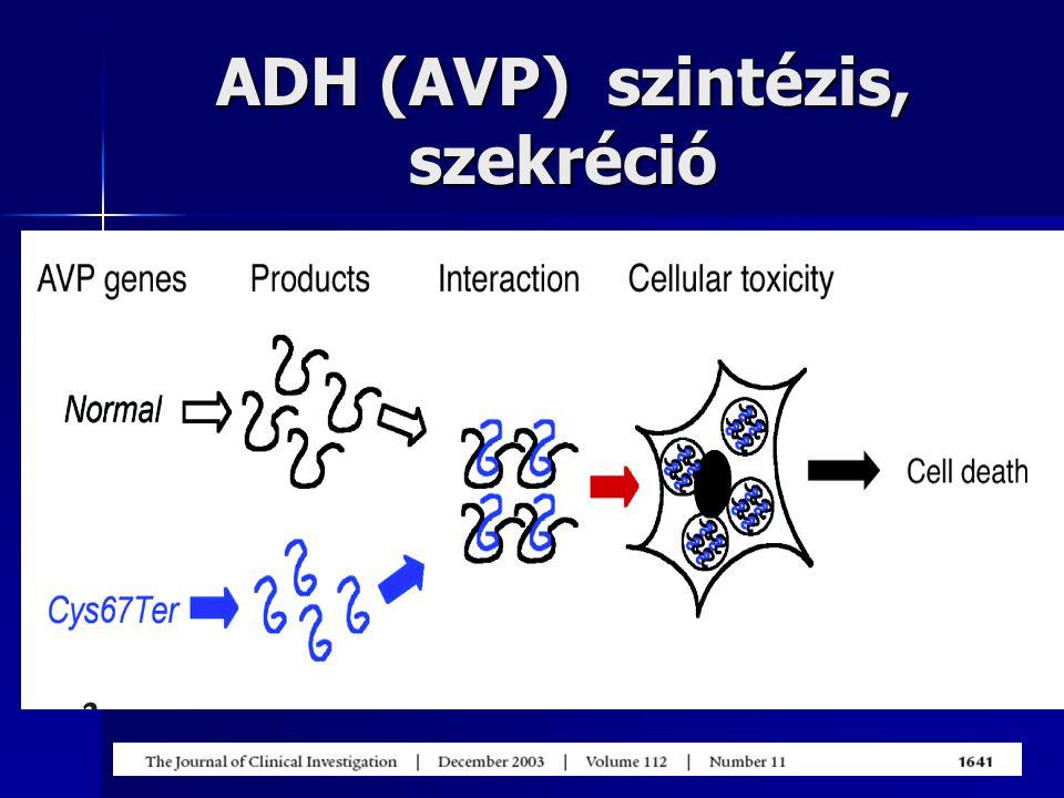 ADH (AVP) szintézis, szekréció