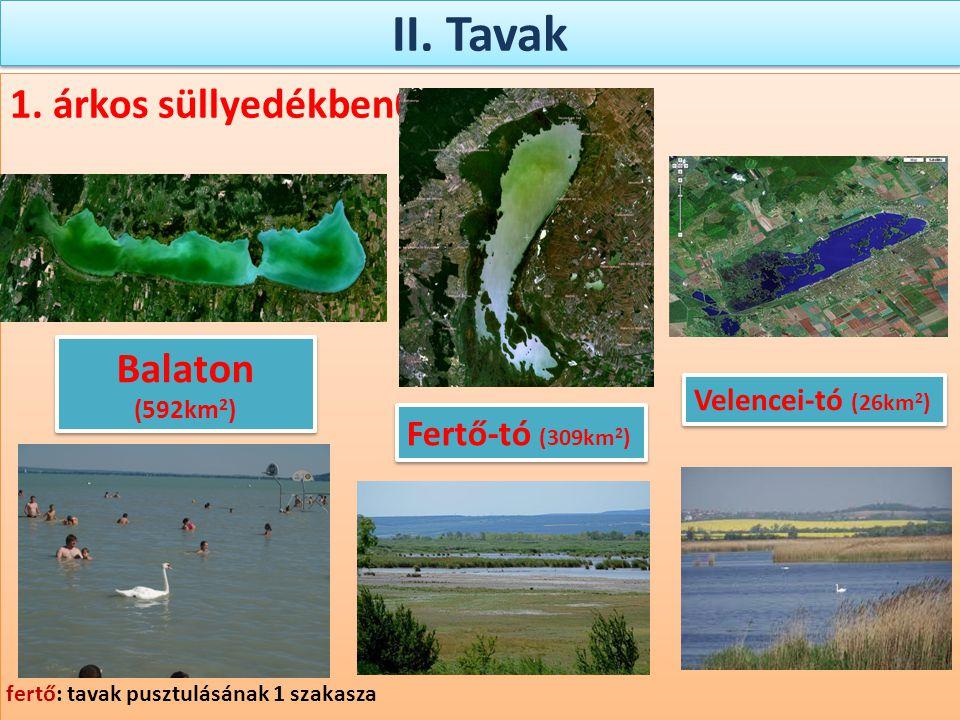 II. Tavak 1. árkos süllyedékben0 Fertő-tó (309km 2 ) Velencei-tó (26km 2 ) Balaton (592km 2 ) fertő: tavak pusztulásának 1 szakasza