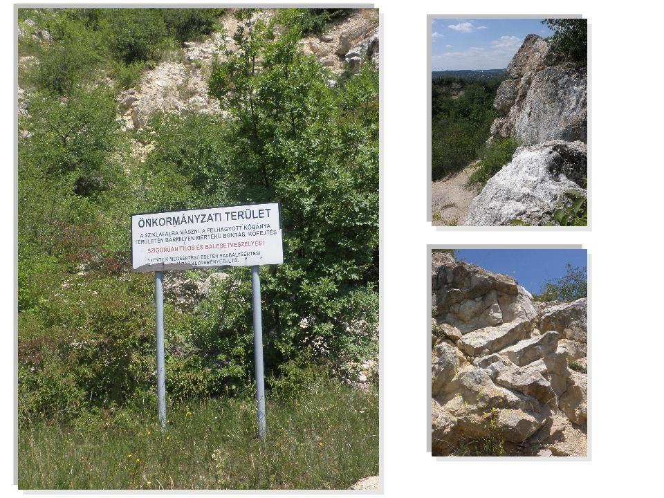 Latin neve: Fumana procumbens. Élőhely: nyílt sziklai és homokpusztai gyepeken.