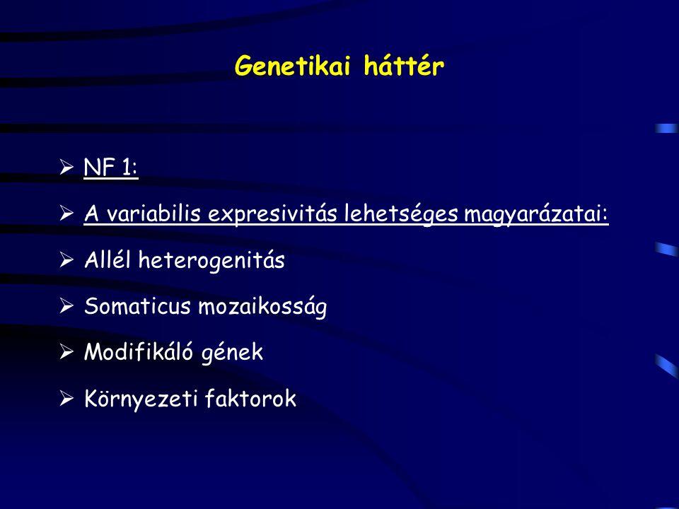 Genetikai háttér  NF 1:  A variabilis expresivitás lehetséges magyarázatai:  Allél heterogenitás  Somaticus mozaikosság  Modifikáló gének  Körny