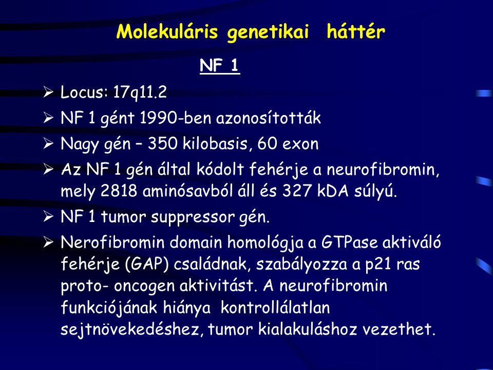 Molekuláris genetikai háttér NF 1  Locus: 17q11.2  NF 1 gént 1990-ben azonosították  Nagy gén – 350 kilobasis, 60 exon  Az NF 1 gén által kódolt fehérje a neurofibromin, mely 2818 aminósavból áll és 327 kDA súlyú.