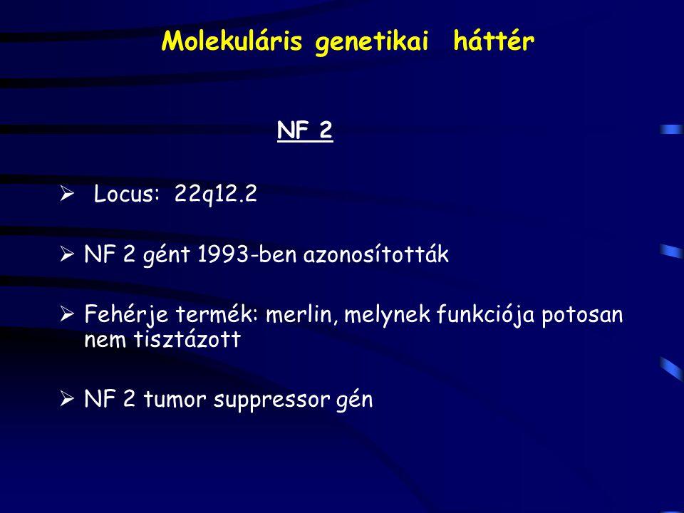 Molekuláris genetikai háttér NF 2  Locus: 22q12.2  NF 2 gént 1993-ben azonosították  Fehérje termék: merlin, melynek funkciója potosan nem tisztázott  NF 2 tumor suppressor gén