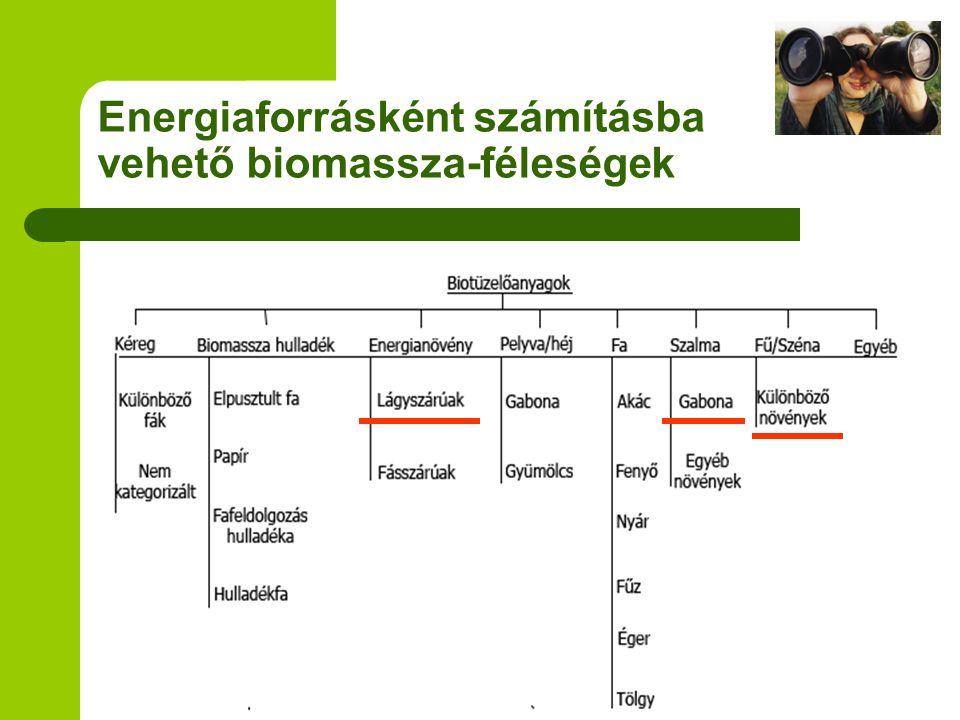 Energiaforrásként számításba vehető biomassza-féleségek
