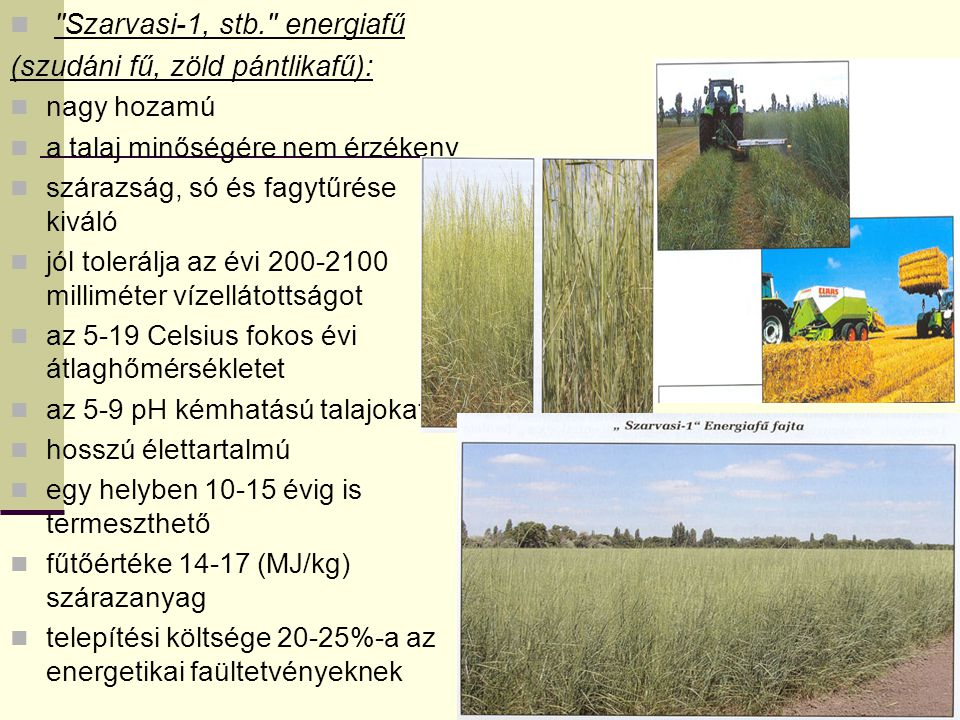 Szarvasi-1, stb. energiafű (szudáni fű, zöld pántlikafű): nagy hozamú a talaj minőségére nem érzékeny szárazság, só és fagytűrése kiváló jól tolerálja az évi 200-2100 milliméter vízellátottságot az 5-19 Celsius fokos évi átlaghőmérsékletet az 5-9 pH kémhatású talajokat hosszú élettartalmú egy helyben 10-15 évig is termeszthető fűtőértéke 14-17 (MJ/kg) szárazanyag telepítési költsége 20-25%-a az energetikai faültetvényeknek