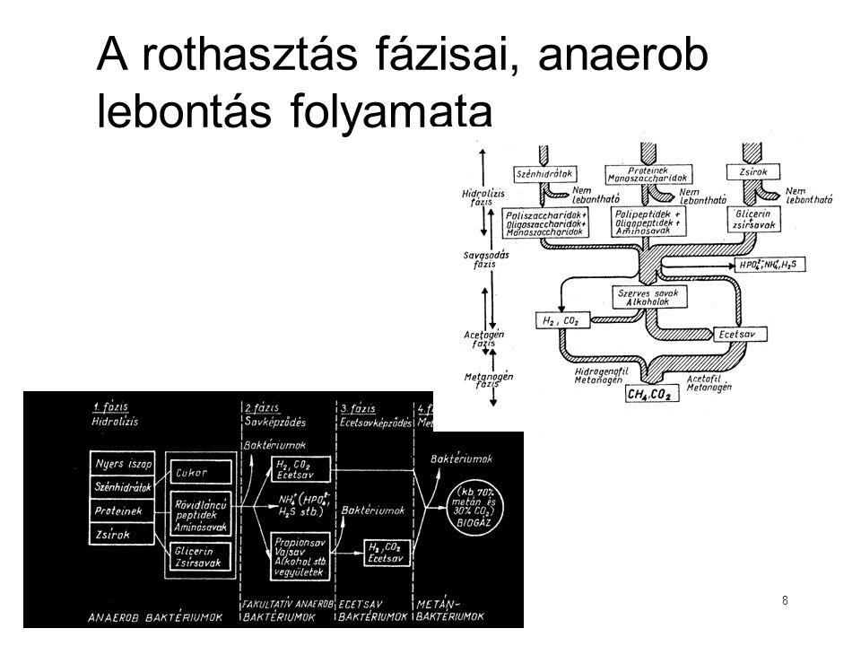 A rothasztás fázisai, anaerob lebontás folyamata 8
