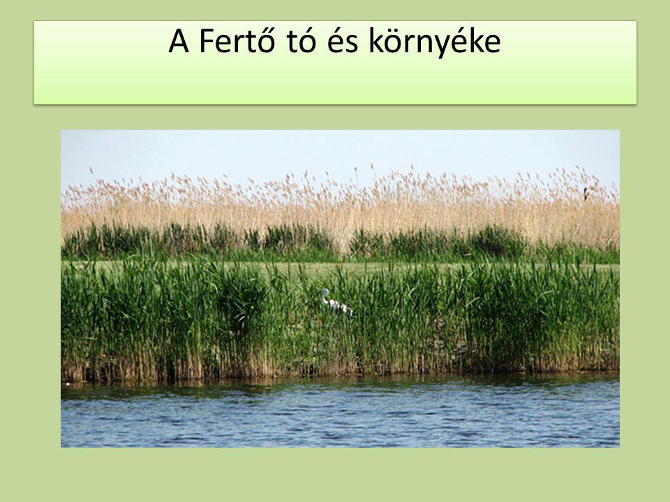 A Fertő tó és környéke