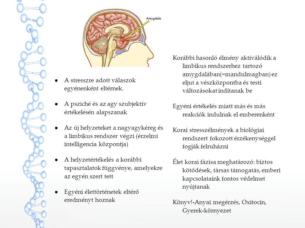 ●A stresszre adott válaszok egyénenként eltérnek. ●A psziché és az agy szubjektív értékelésén alapszanak ●Az új helyzeteket a nagyagykéreg és a limbik