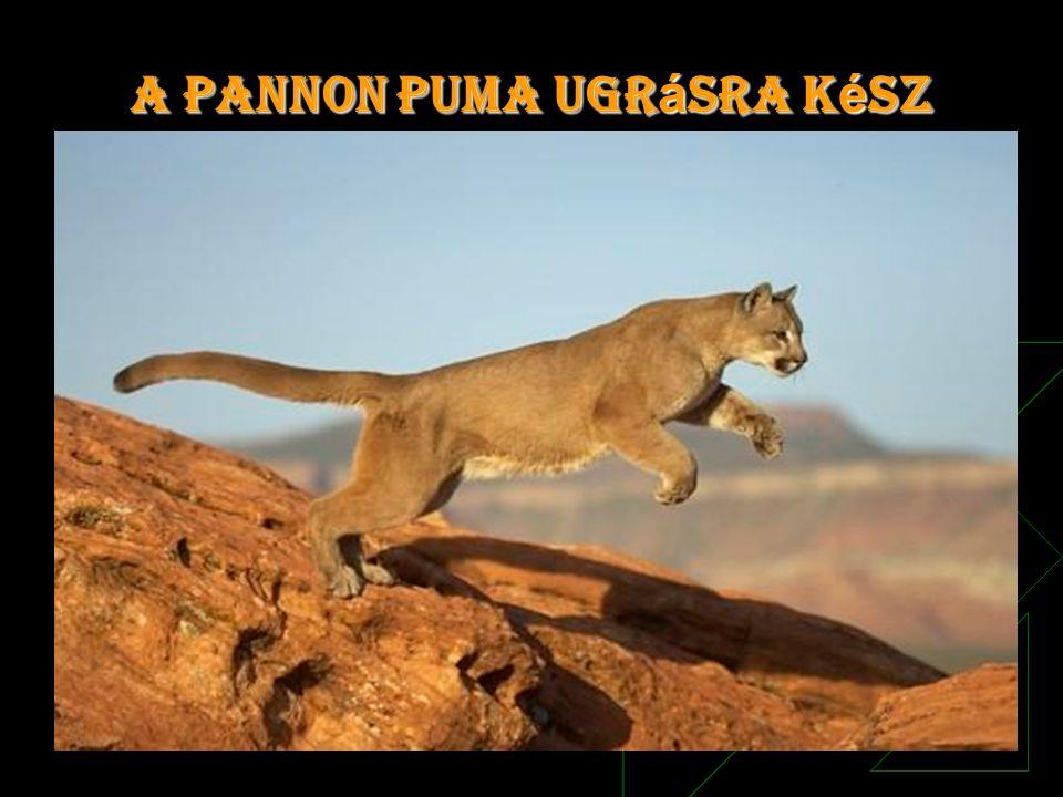 A Pannon Puma ugr á sra k é sz