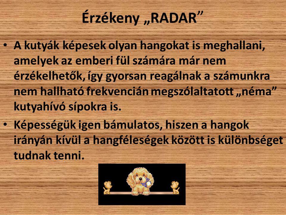 """Érzékeny """"RADAR """" A kutyák képesek olyan hangokat is meghallani, amelyek az emberi fül számára már nem érzékelhetők, így gyorsan reagálnak a számunkra"""