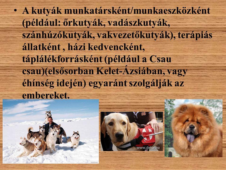 A kutyák munkatársként/munkaeszközként (például: őrkutyák, vadászkutyák, szánhúzókutyák, vakvezetőkutyák), terápiás állatként, házi kedvencként, táplá