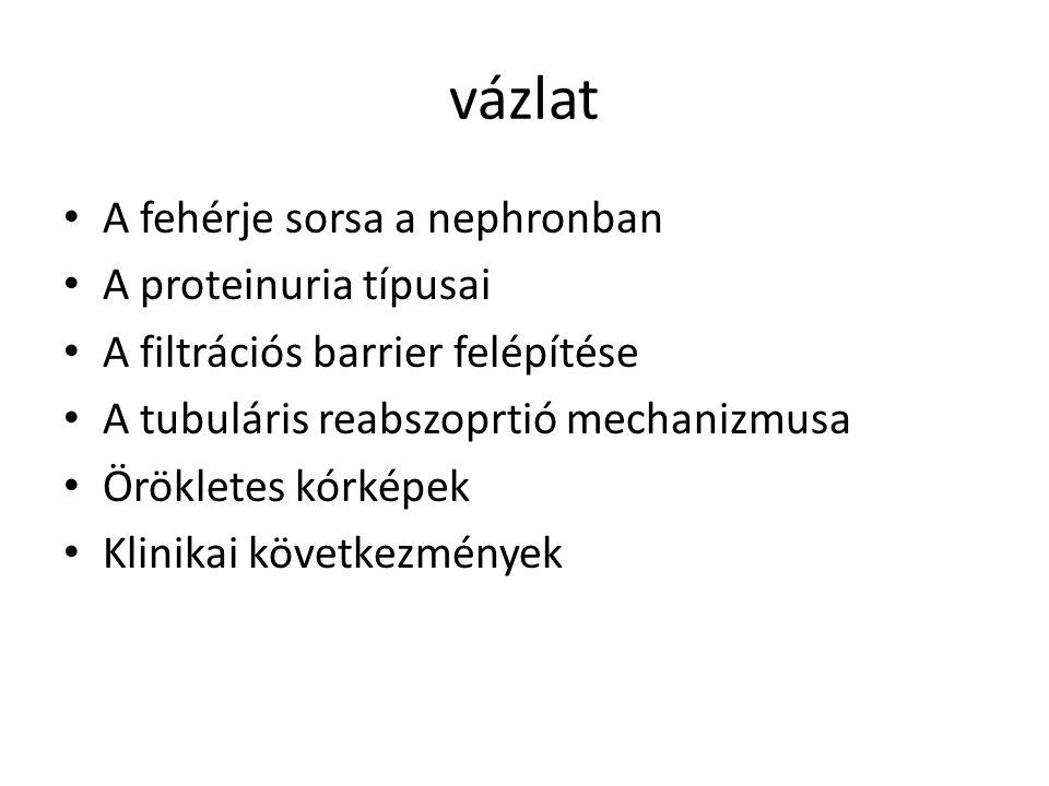GLOMERULÁRIS KÓRKÉPEK