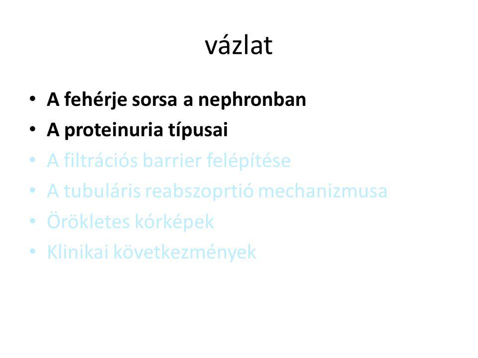 7/6/2014Reusz Gy: Glomeruláris szindrómák Podocyta-diaphragma molekuláris felépítése Cat=Catenin; CD=CD2 asszociált protein; Ez= ezrin; FAK=fokális adhésiós kináz; ILK=integrinhez kötött kináz; M=myosin; PC=podocalycin; S=synaptopodin; TPV= talin, paxillin, vinculin; U=utrophin; Z=Z-1; FSGS= focalis segmantalis glomerulosclerosis; TRCP6=Transient receptor potential cation channel, subfamily C, member 6; CNF=finn típusú congenitális nephrosis AR-FSGS AD-FSGS CNF AR-AD-Alport TRPC6