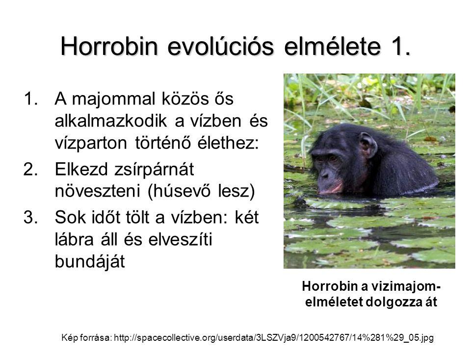 Horrobin evolúciós elmélete 1. 1.A majommal közös ős alkalmazkodik a vízben és vízparton történő élethez: 2.Elkezd zsírpárnát növeszteni (húsevő lesz)