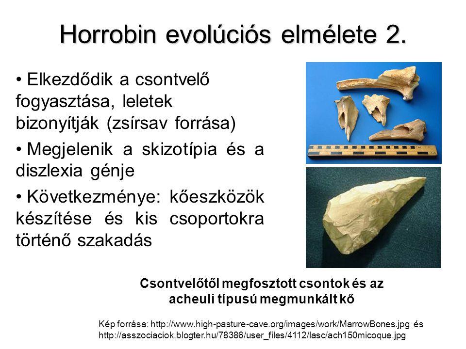 Horrobin evolúciós elmélete 2. Elkezdődik a csontvelő fogyasztása, leletek bizonyítják (zsírsav forrása) Megjelenik a skizotípia és a diszlexia génje