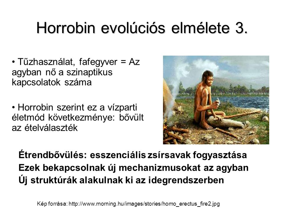 Horrobin evolúciós elmélete 3. Tűzhasználat, fafegyver = Az agyban nő a szinaptikus kapcsolatok száma Horrobin szerint ez a vízparti életmód következm
