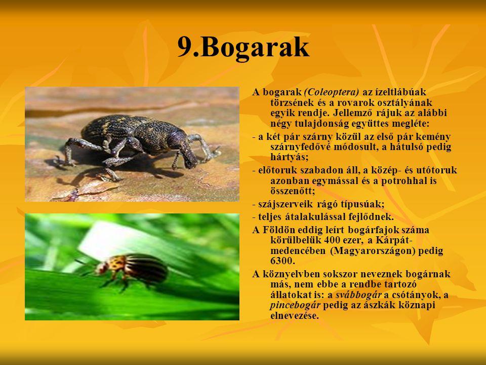 9.Bogarak A bogarak (Coleoptera) az ízeltlábúak törzsének és a rovarok osztályának egyik rendje. Jellemző rájuk az alábbi négy tulajdonság együttes me