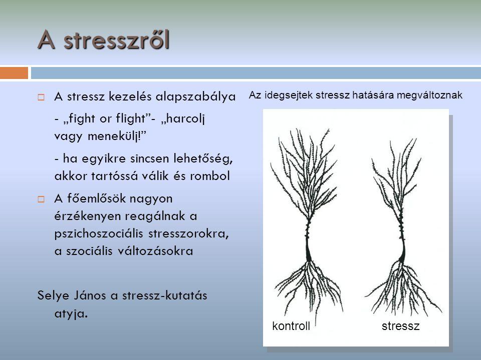 """A stresszről  A stressz kezelés alapszabálya - """"fight or flight""""- """"harcolj vagy menekülj!"""" - ha egyikre sincsen lehetőség, akkor tartóssá válik és ro"""